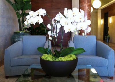 Plants lily