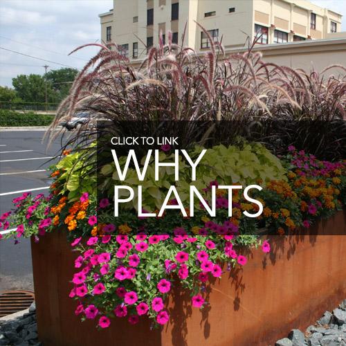 homepg whyplants 500x500